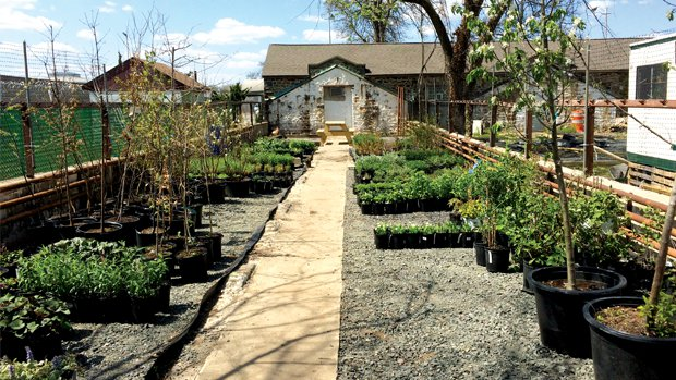 Roots To Re-Entry's ornamental plant nursery donates plants to local community gardens