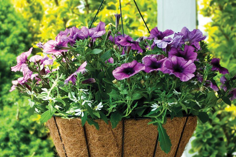 AquaSav Hanging Baskets - Pride Garden Products