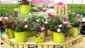 Ball Horticultural Co. Buys Conard-Pyle/Star Roses And Plants