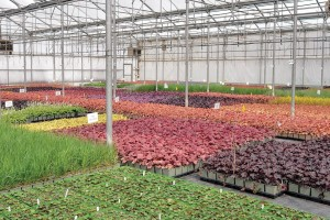 At Its Norval Ontario Facility Sheridan Nurseries Grows Annuals Perennials And Vines