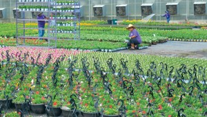 Bell Nursery grows in an environmentally and socially responsible manner and is a Veriflora-certified sustainable producer