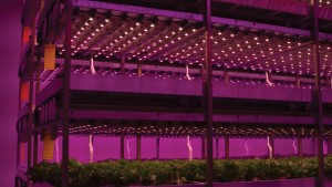 MSU Offers New Greenhouse Lighting Online Course For Growers