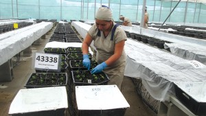 Dümmen Orange Implementing Consistent Standards On All Offshore Cuttings Farms