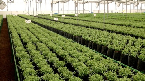 Is it Time for the Horticulture Industry to Rethink What IPM Means?