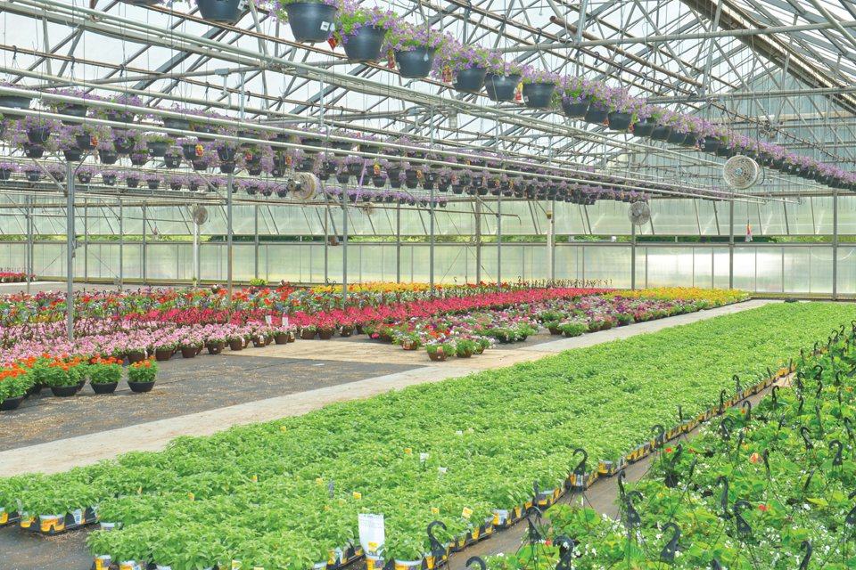 With around 7,400,000 square feet of greenhouse space to manage, Wheeler counts on his team to keep things running smoothly