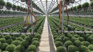 Five Tips For Successful Use Of Boom Irrigation Lighting On Long-Day Ornamentals