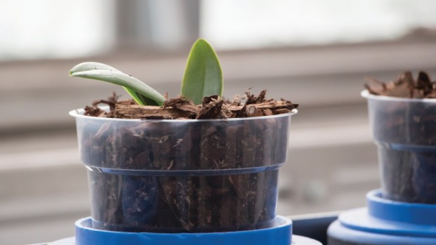 As the pots continue around the carousel, bark is pushed into the pots and settles around the roots, which helps to avoid compaction in the growing media