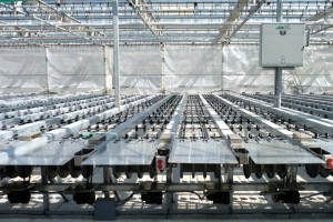 Dallas Johnson Greenhouses can load as many as 150 skus on its new shipping system at a time