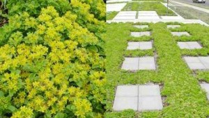 Stepables Unveils New Line Of Ground Covers Available To Growers