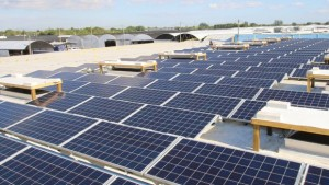 Costa Farms Ramps Up Sustainability Efforts With Solar Energy Investments