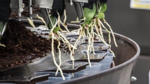 Technology Improves Orchid Production At Green Circle Growers