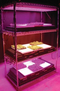 Bedding plants produced under light-emitting diodes