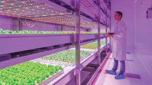 Recoup LED Costs With Help From The USDA And Illumitex