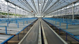 How Dallas Johnson Greenhouses Is Simplifying Shipping