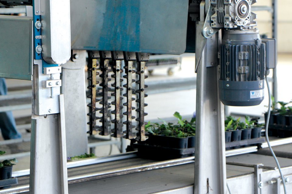 The machine then turns the cut tray to move forward horizontally, and it enters a second trimmer that cuts the trays again, this time resulting in plants in their individual cells, free of their original pack