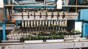 How Spring Meadow Nursery's Custom Sorting Machine  Keeps Its Young Plants Uniform