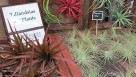 Tillandsia Air Plants (Plantiflor)
