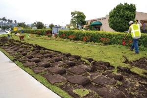 Most of the California cities participating in rebate programs to rip out lawns have included requirements for landowners to install approved drought-tolerant landscapes, rather than leaving bare lots, and some cities have banned the use of artificial turf.