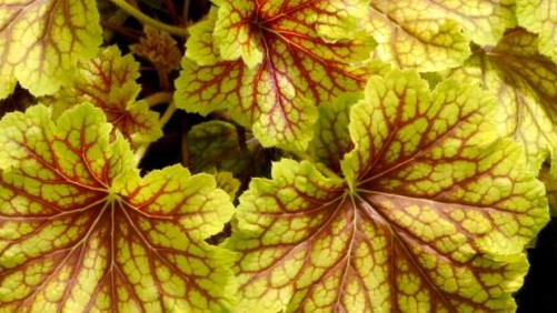 14 New Perennials For Containers, Pollinators, Beds And Borders