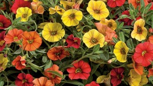 Combination Planters That Are Easy Early