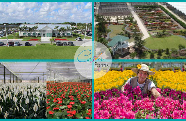Costa Farms Collage Of Images