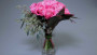 Dummen Pop Up Store Romance Rose