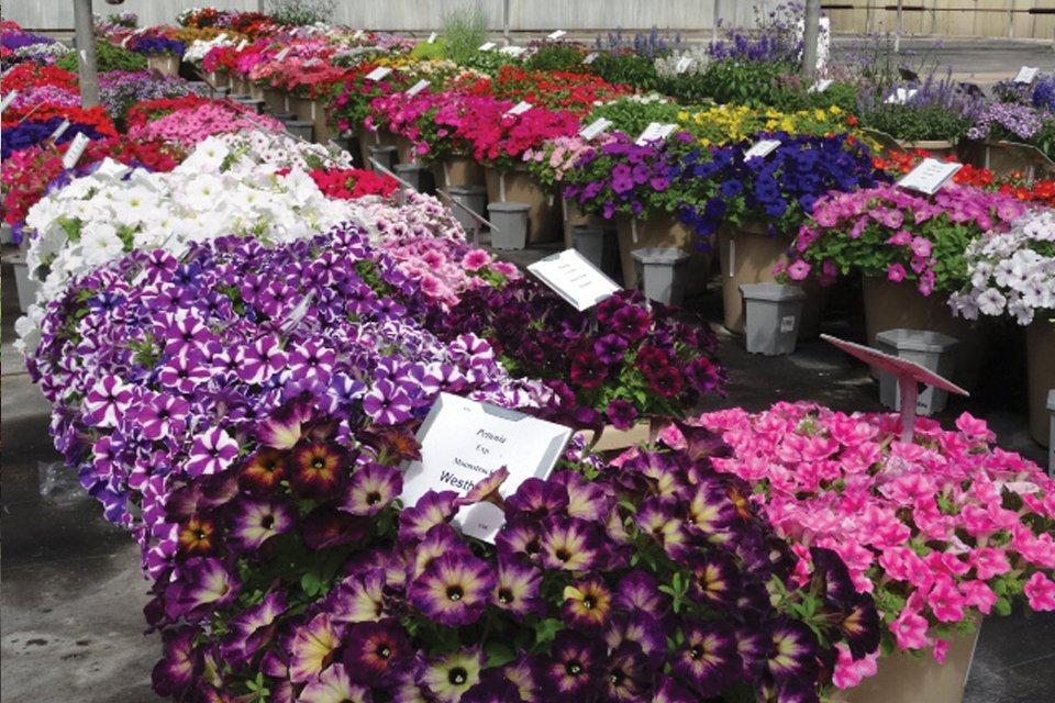 Welby gardens denver garden ftempo for Welby gardens