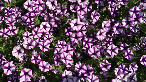 New Southern-Centric Ornamental Production Conference To Be Held June 12-15 in Georgia