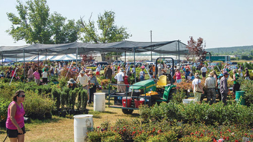 Plant Sale Helps Power Future of Florida Horticulture Industry