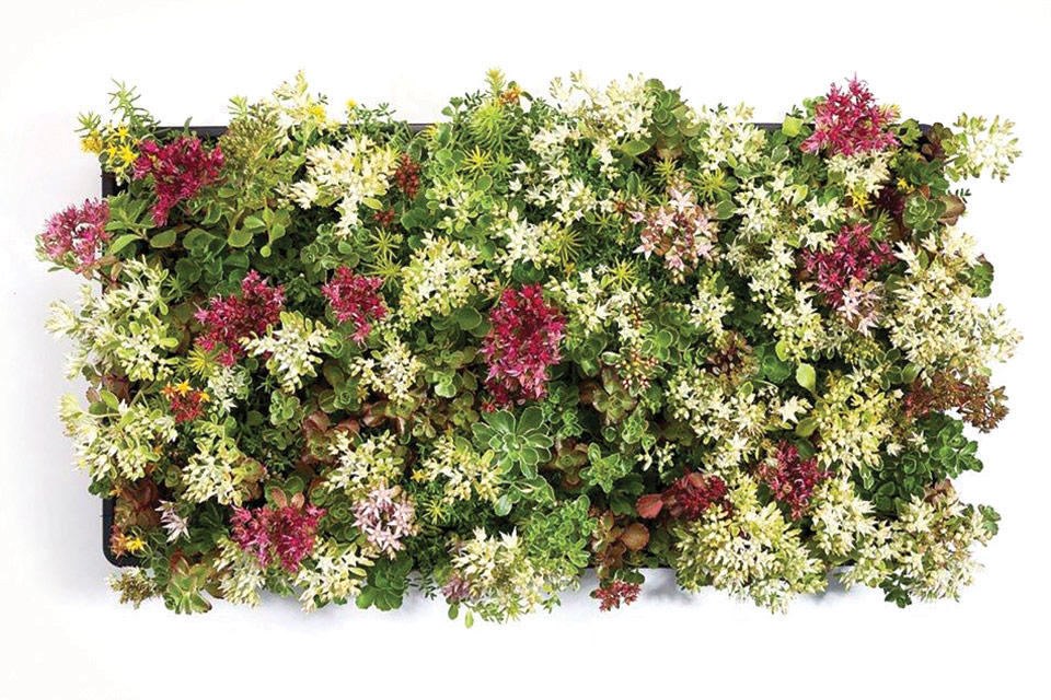 Northwest Horticulture offers four different mixes of sedum tiles for green roof projects. Photo courtesy North West Horticulture