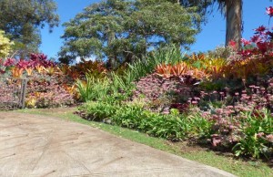 Succulent landscape