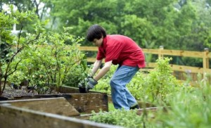 boy planting vegetables in garden free domain