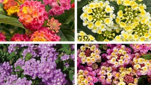 16 Drought Tolerant Crops For The Landscape