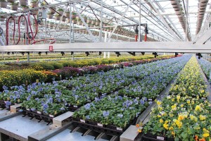 At Metrolina Greenhouses in Huntersville, NC, the shipping area has significantly cut labor since the Echo-Veyor system 2