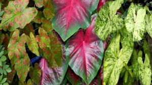 16 New Foliage Plants To Round Out The Garden