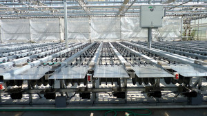 Dallas Johnson Greenhouses has significantly reduced the amount of time and labor spent pulling and processing orders, while improving plant quality at retail