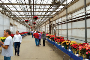 Dan Schantz Farm and Greenhouses has been running poinsettia trials since the mid-2000s, supervising 200 cultivar varieties.