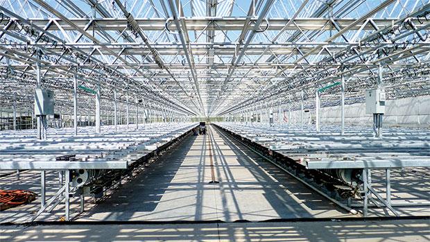 Echo-Veyor Has Made Plant Handling Easier For Greenhouse Growers