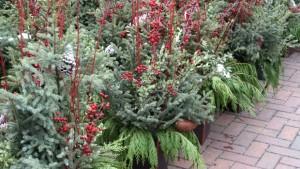 Gertens winter porch pots 2010