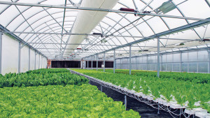 GrowSpan Series 1000 Commercial Greenhouses (Growers Supply)
