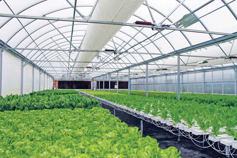 Growers Supply Hosting Controlled Environment Agriculture