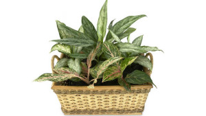 Houseplant Featured Image