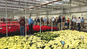 Millstadt Young Plants Hosting Poinsettia Open House