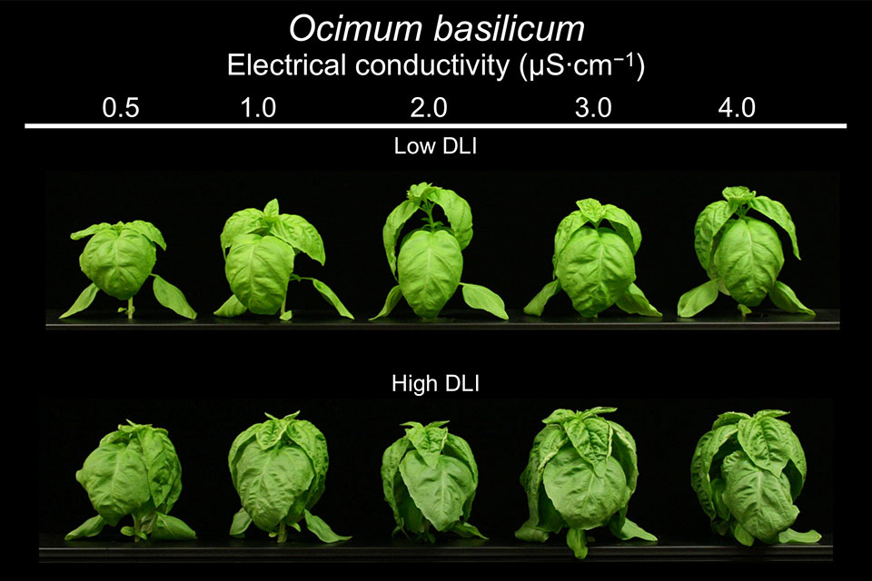 Figure 1. Ocimum basilicum electrical conductivity