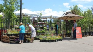 Vendor Day At Osuna Nursery Draws Gardeners And Builds Vendor Relationships
