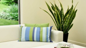 Tropical And Indoor Foliage Plants Emerge As A Lifestyle Choice