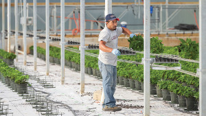 Echo-Veyor Has Made Plant Handling Easier For Greenhouse Growers