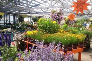 sunny days My Garden Nursery Bellingham