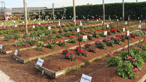 Costa Farms Hosting Winter Open House in January