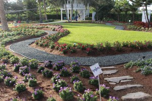 Costa Farms' Trial Gardens show new varieties in the landscape
